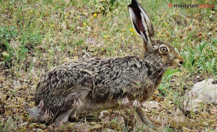 Rüyada Tavşan görmek ne demek? İslami ve Dini Anlamı