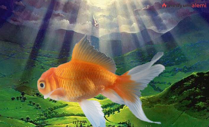 Rüyada Balık Görmek ne demek? İslami ve Dini Anlamı