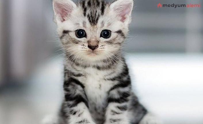 Rüyada Kedi görmek ne demek? İslami ve Dini Anlamı